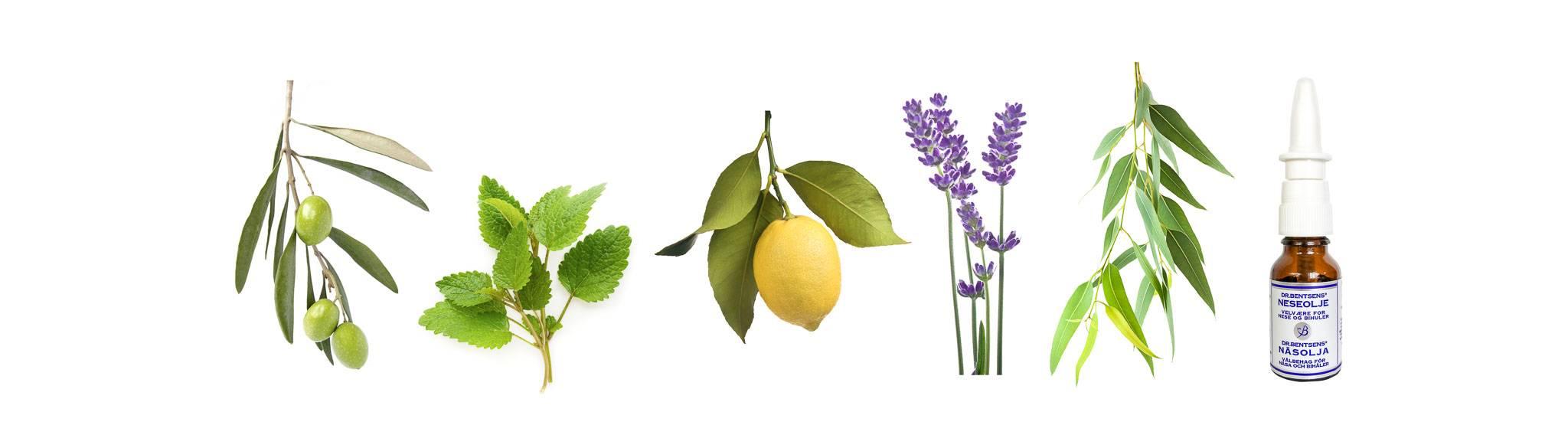 Bilde av planter og neseolje